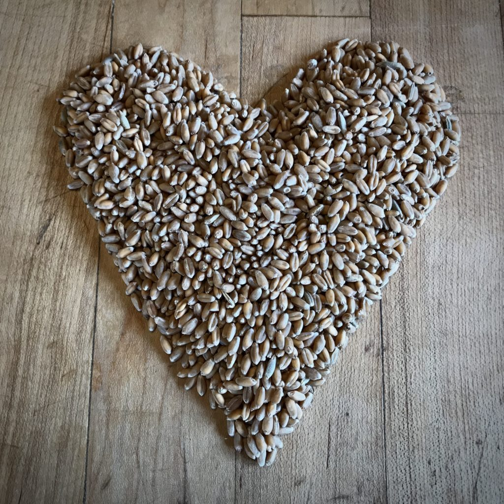 A Heart shape made from wheat berries