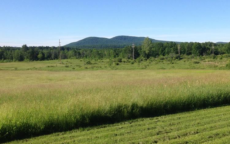 progress-on-triple-green-jade-farm