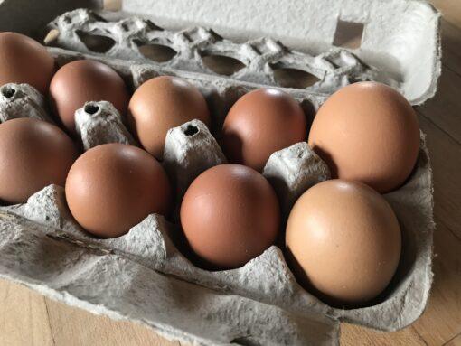Free-Range-Organic-Eggs03