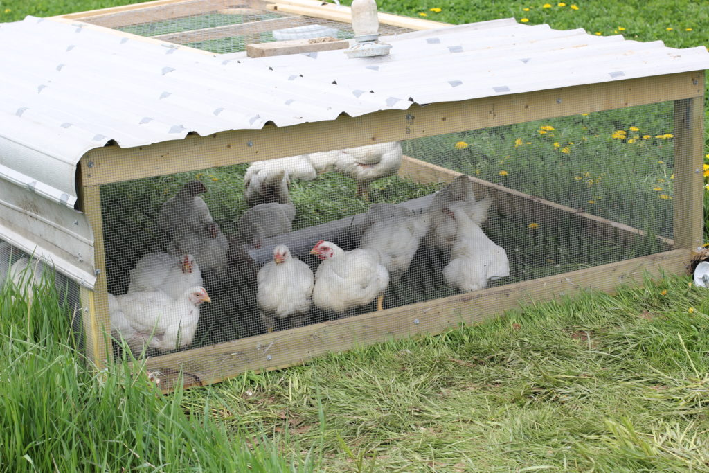 chicken tractor for 30 birds