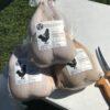 chicken-harvest