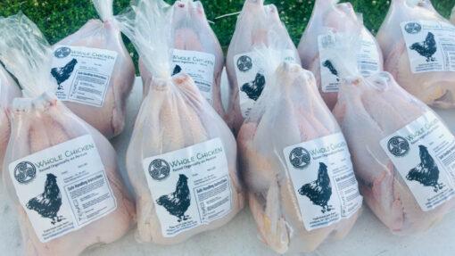 homestead-chicken-harvest